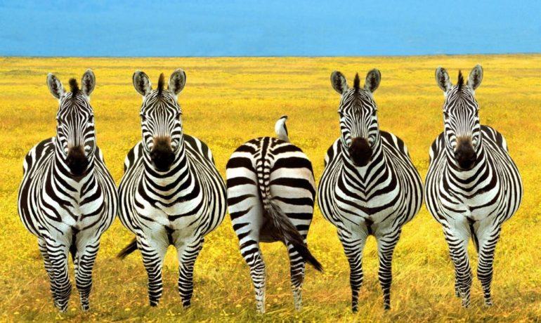 Летим в Танзанию прямым рейсом!