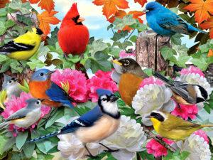 фестиваль птиц