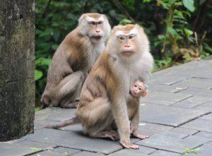 Monkey Hill Тайланд