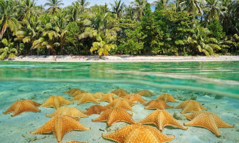 Где находится пляж, «усыпанный» морскими звездами